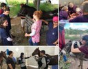Projetos de extensão voltados para saúde animal. Imagem: montagem com fotos.
